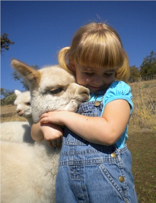 I Believe In Alpacas