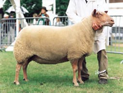 Photo Content: National Sheep Association
