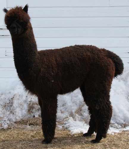 Full Fleece 3-23-2013